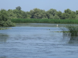 Backwater - Danube Delta